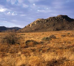 namaqualand desert